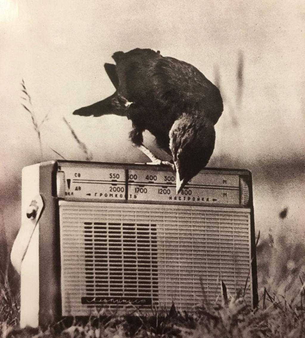 radiojunglefever31